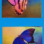SOLD - Butterflies - two studies, oil on canvas